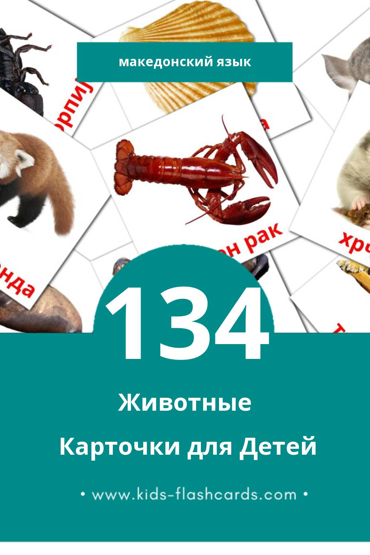"""""""животни"""" - Визуальный Македонском Словарь для Малышей (134 картинок)"""