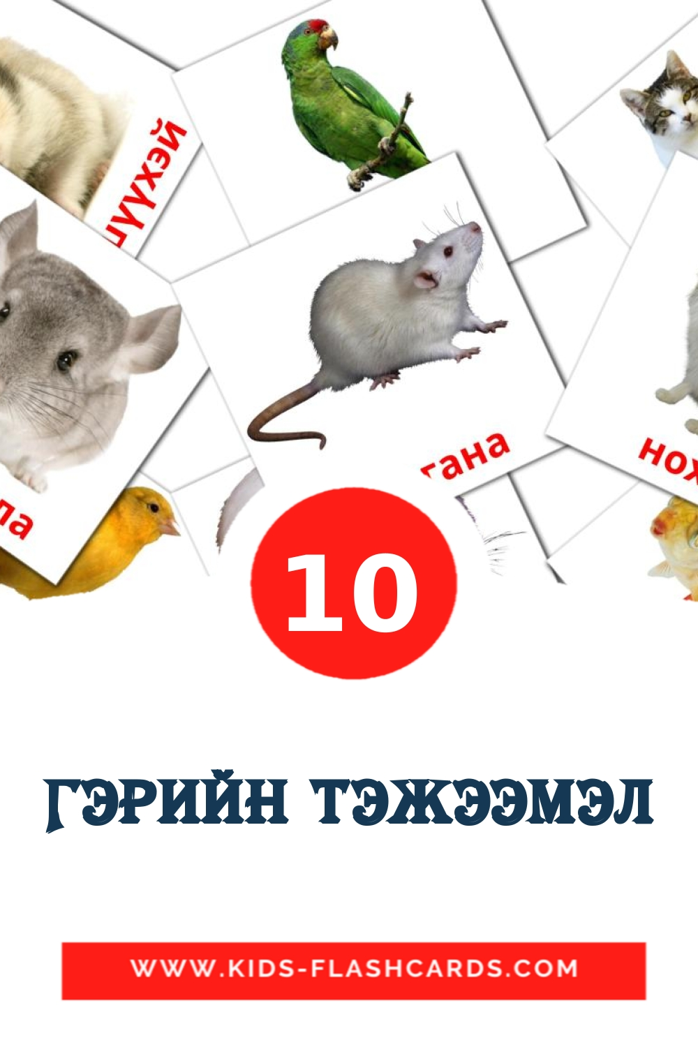 10 Гэрийн тэжээмэл Picture Cards for Kindergarden in mongolian