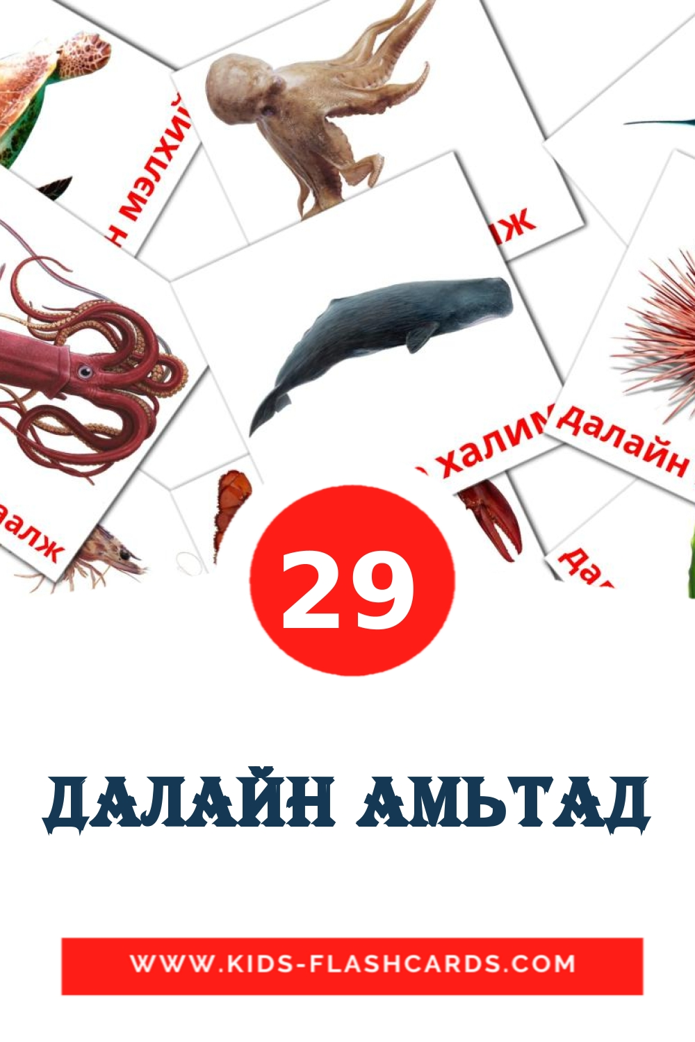 29 далайн амьтад Picture Cards for Kindergarden in mongolian