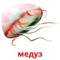 медуз picture flashcards