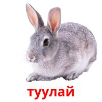 туулай picture flashcards