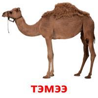 тэмээ picture flashcards