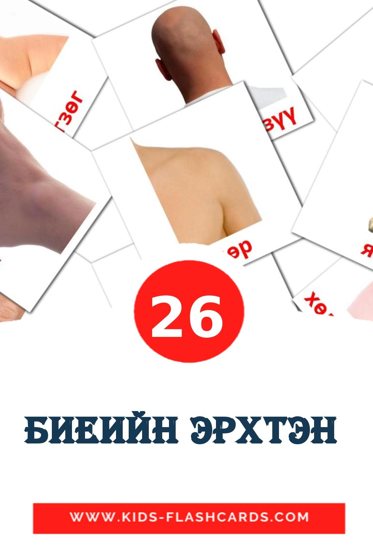 26 Биеийн эрхтэн  Picture Cards for Kindergarden in mongolian
