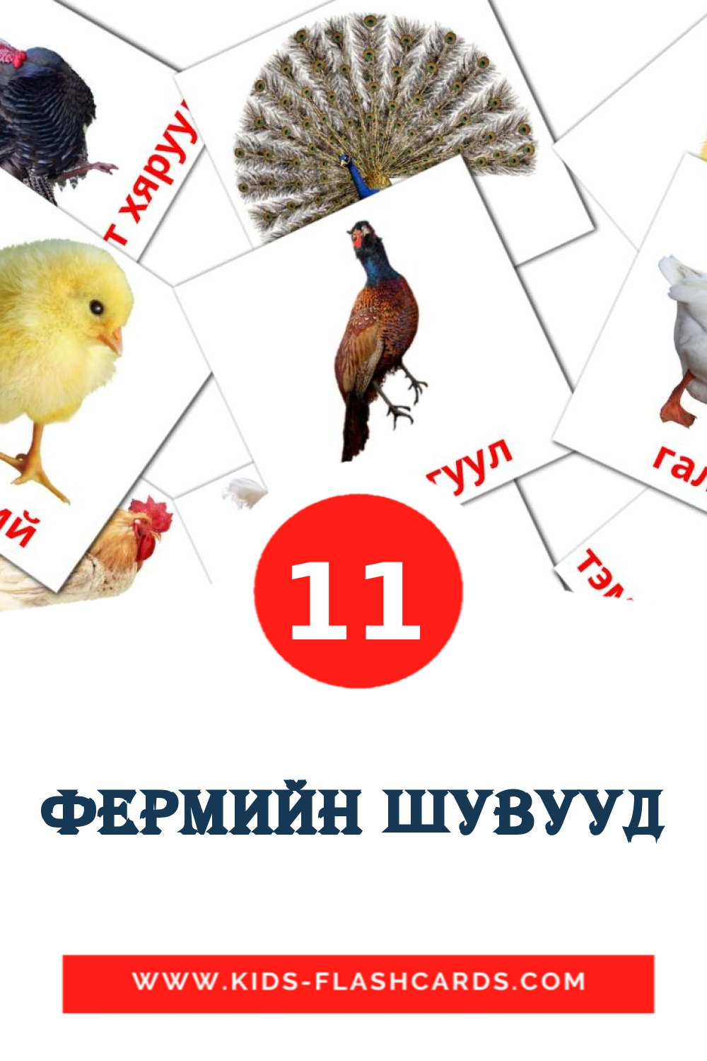 11 Фермийн шувууд Picture Cards for Kindergarden in mongolian