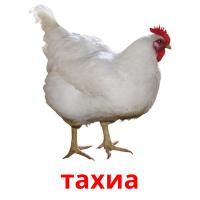 тахиа picture flashcards