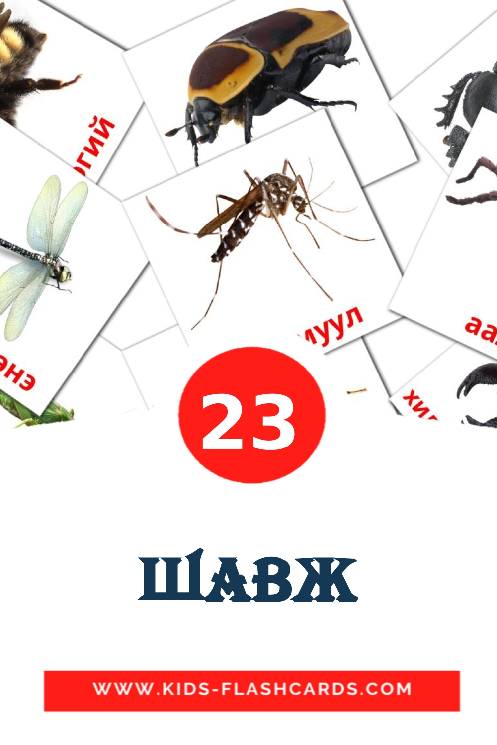 Шавж - free cards in mongolian