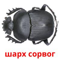 шарх сорвог picture flashcards