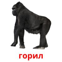 горил picture flashcards