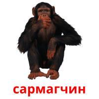 сармагчин picture flashcards