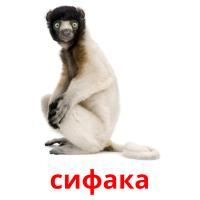 сифака picture flashcards