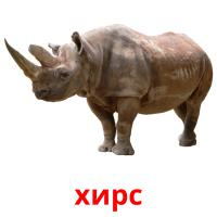 хирс picture flashcards