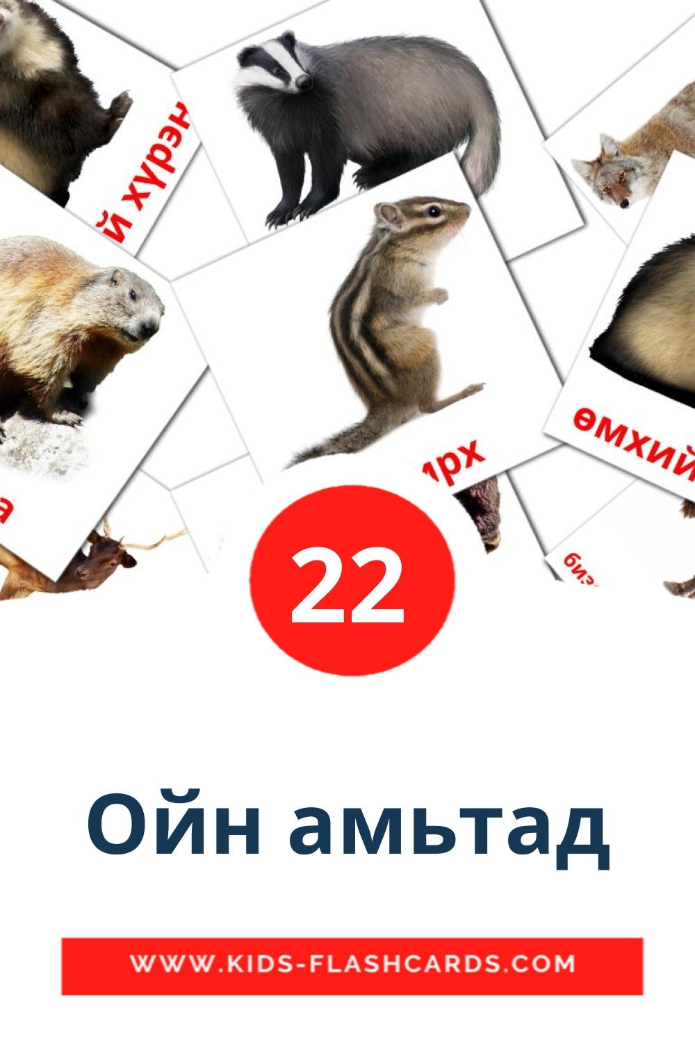 22 Ойн амьтад Picture Cards for Kindergarden in mongolian