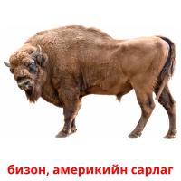 бизон, америкийн сарлаг picture flashcards