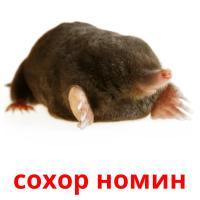 сохор номин picture flashcards