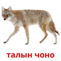 талын чоно picture flashcards