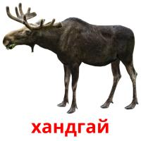 хандгай picture flashcards