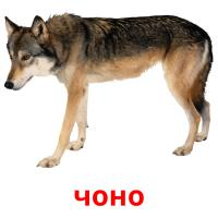 чоно picture flashcards