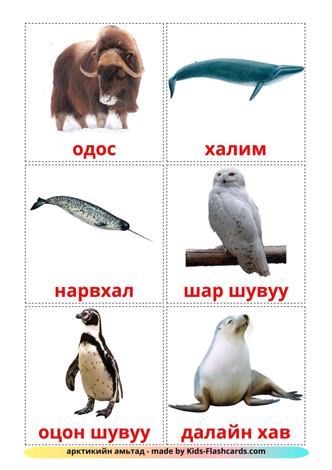 Arctic animals - 14 Free Printable mongolian Flashcards