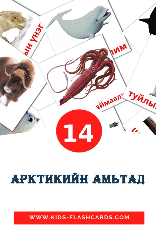 14 арктикийн амьтад Picture Cards for Kindergarden in mongolian