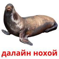далайн нохой picture flashcards