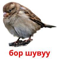 бор шувуу picture flashcards