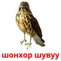 шонхор шувуу picture flashcards