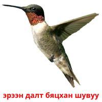 эрээн далт бяцхан шувуу picture flashcards