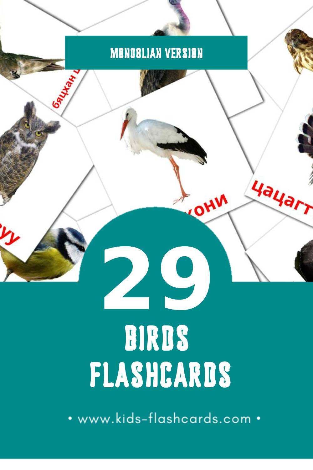 Visual Шувууд Flashcards for Toddlers (29 cards in Mongolian)