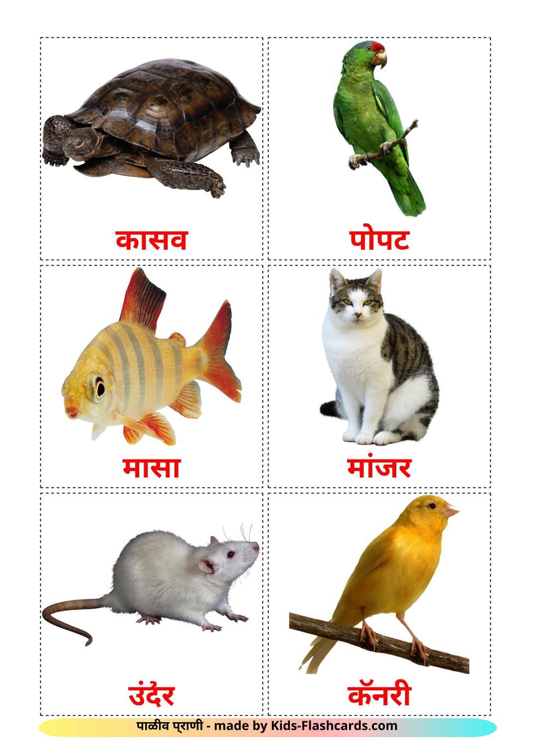 Domestic animals - 10 Free Printable marathi Flashcards