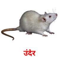 उंदीर picture flashcards
