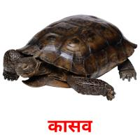 कासव picture flashcards