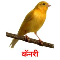 कॅनरी picture flashcards