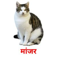 मांजर picture flashcards