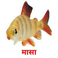 मासा picture flashcards