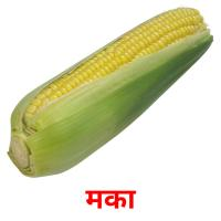 मका picture flashcards