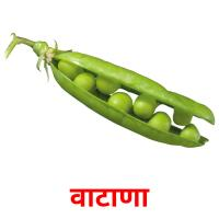 वाटाणा picture flashcards