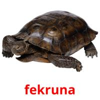 fekruna picture flashcards