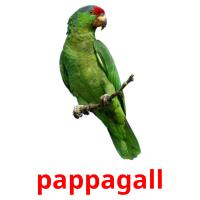 pappagall picture flashcards