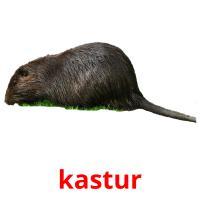 kastur picture flashcards