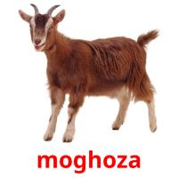 moghoza picture flashcards