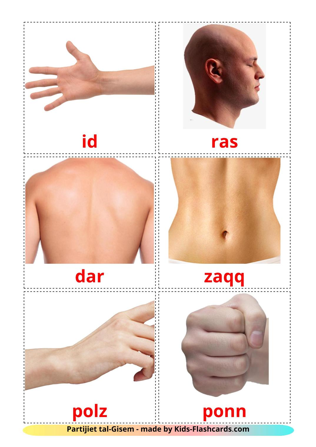 Body Parts - 26 Free Printable maltese Flashcards