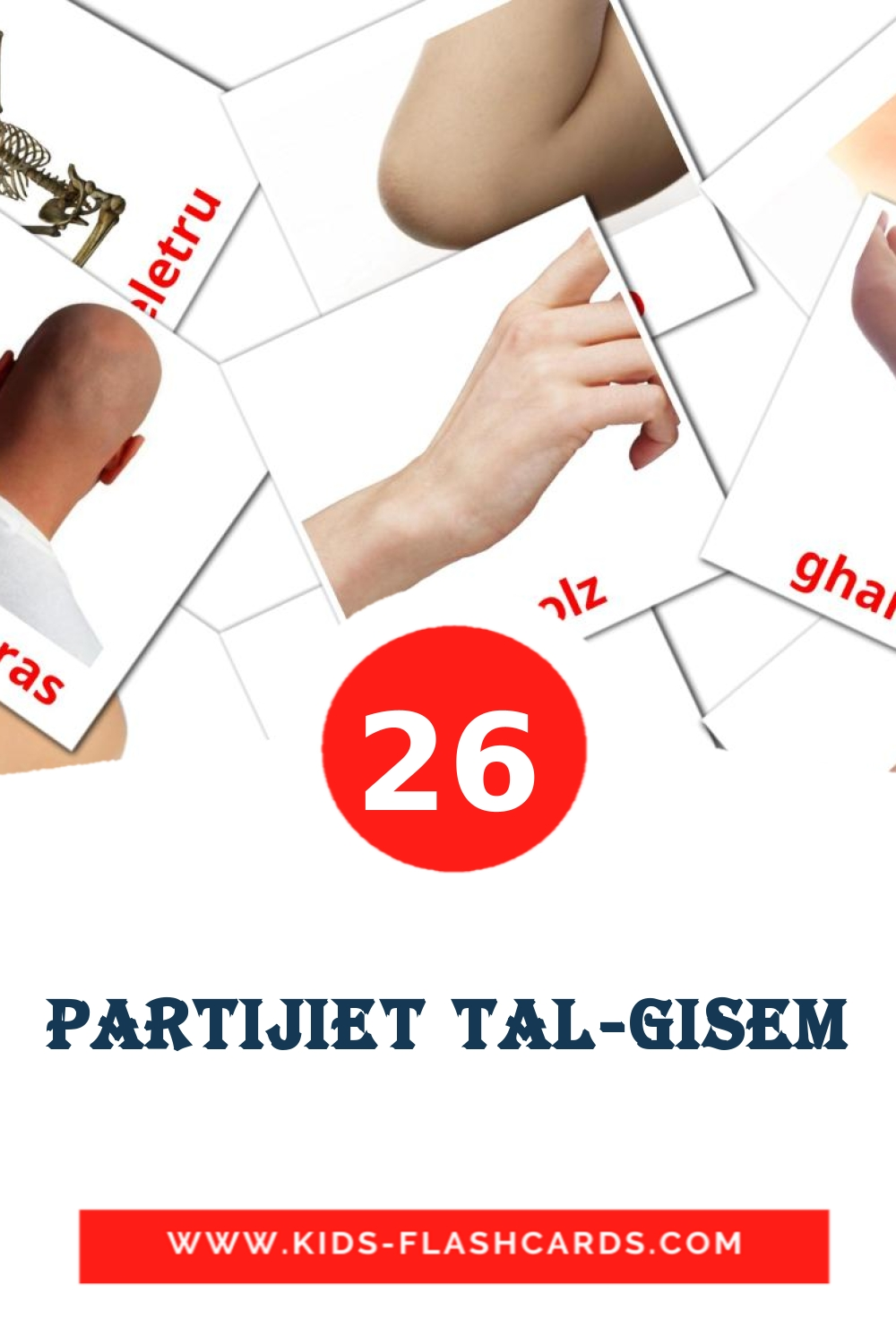 26 Partijiet tal-Gisem Picture Cards for Kindergarden in maltese