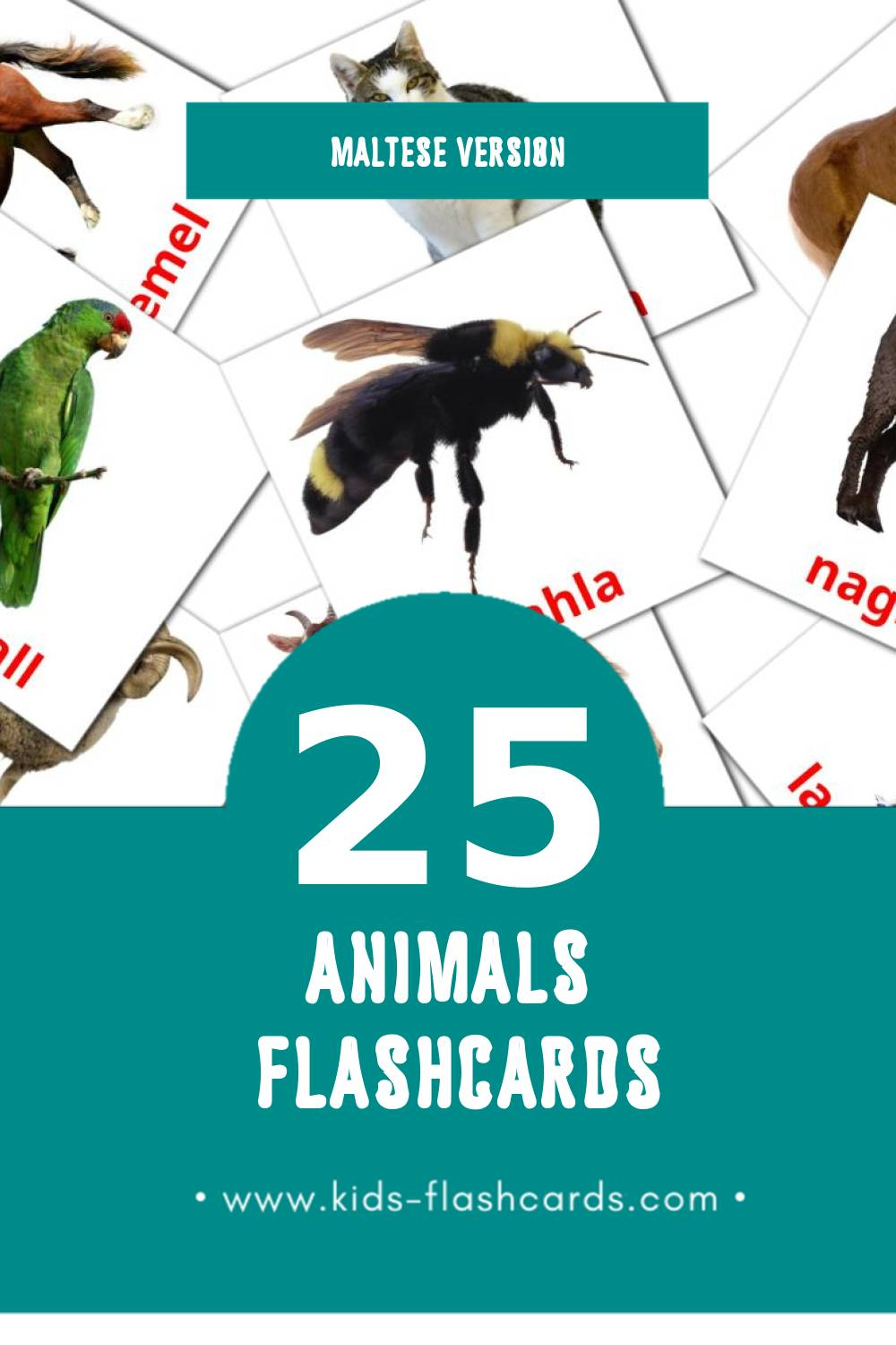 Visual Annimali Flashcards for Toddlers (25 cards in Maltese)
