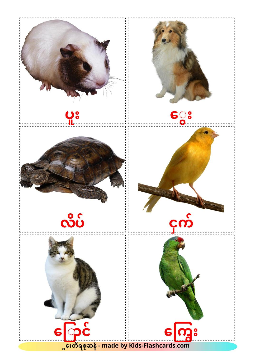 Domestic animals - 10 Free Printable burmese Flashcards