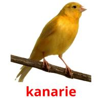 kanarie picture flashcards