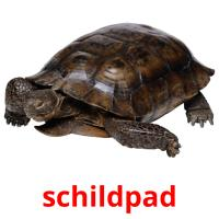 schildpad picture flashcards