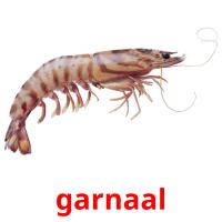 garnaal picture flashcards