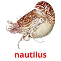 nautilus picture flashcards