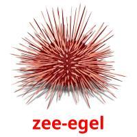 zee-egel picture flashcards