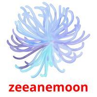 zeeanemoon picture flashcards